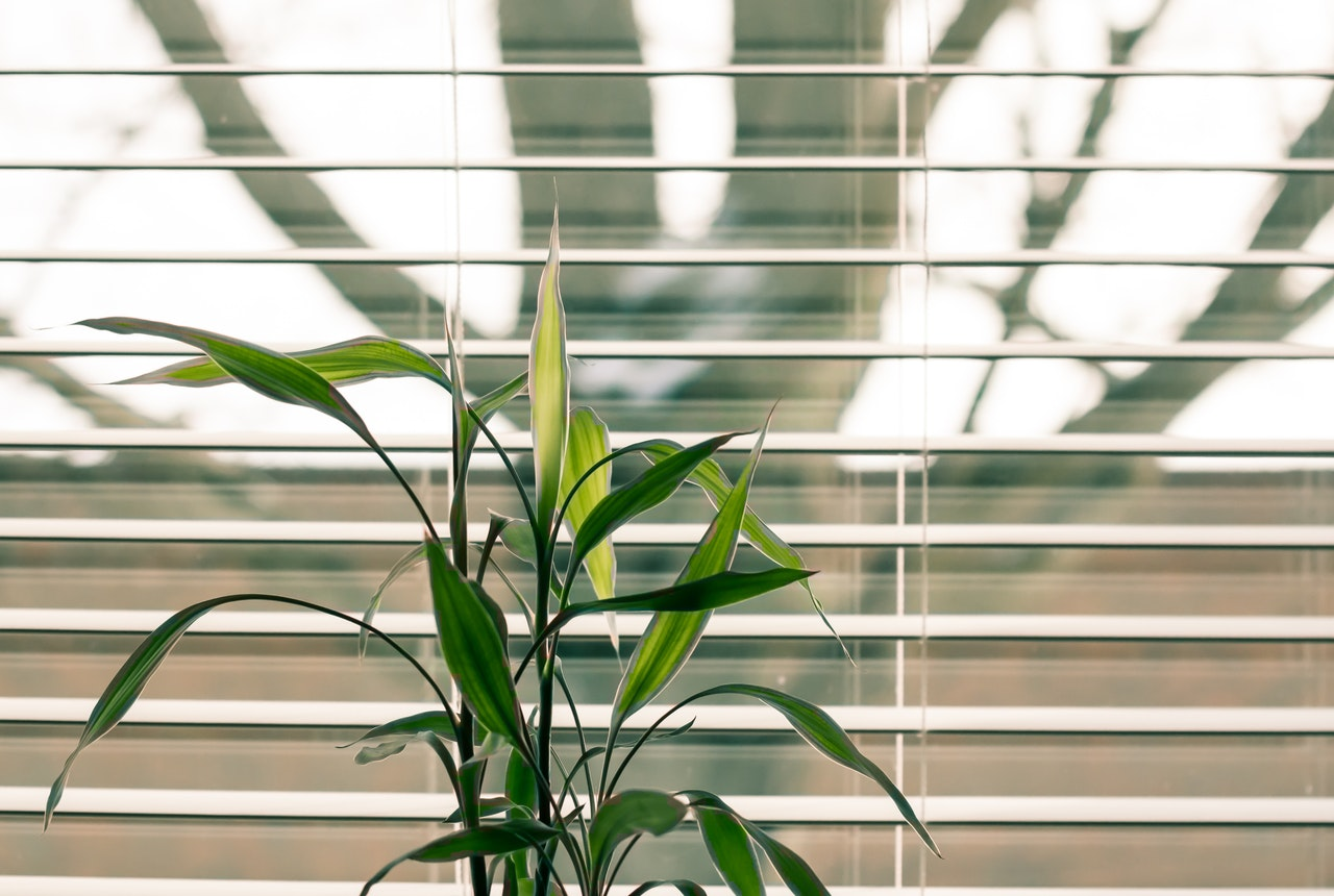 plant in office space in front of open blinds